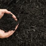 Everything to Know About Mulch