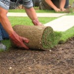 Sod Installation and Maintenance